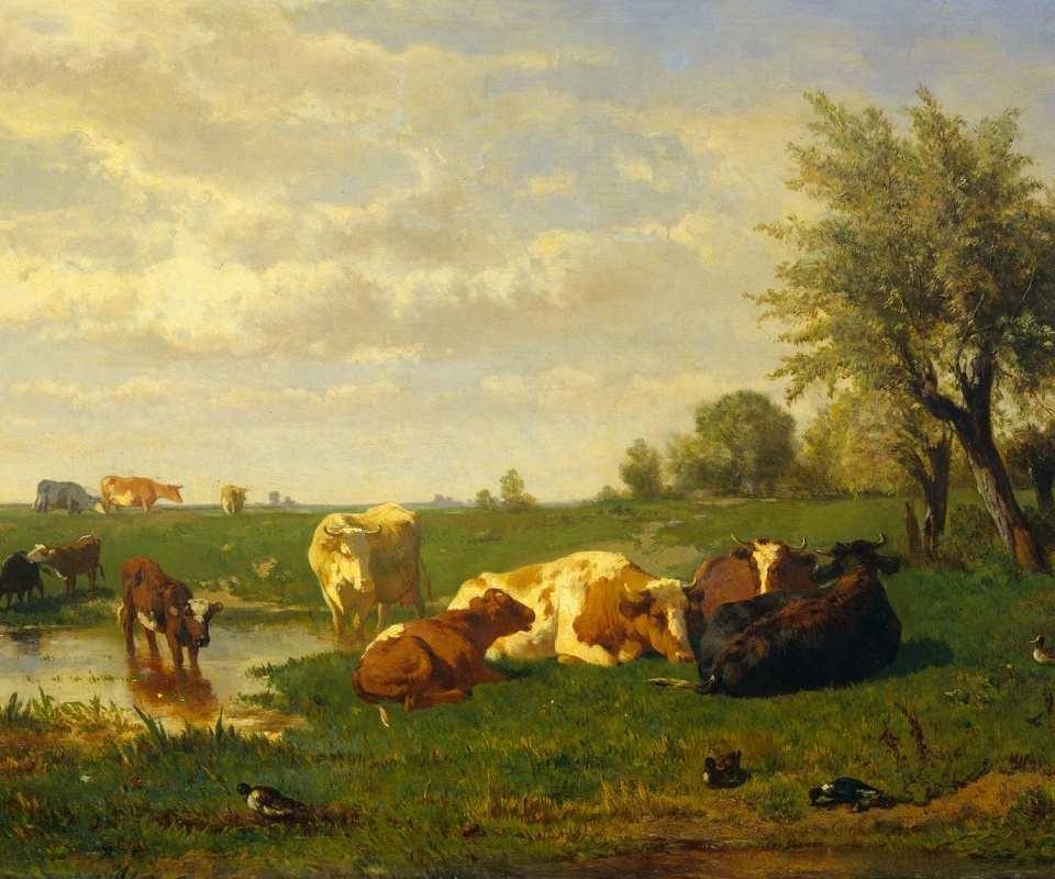 Коровы на Лугу