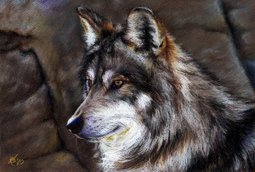Valeria Kulikova. Lobo
